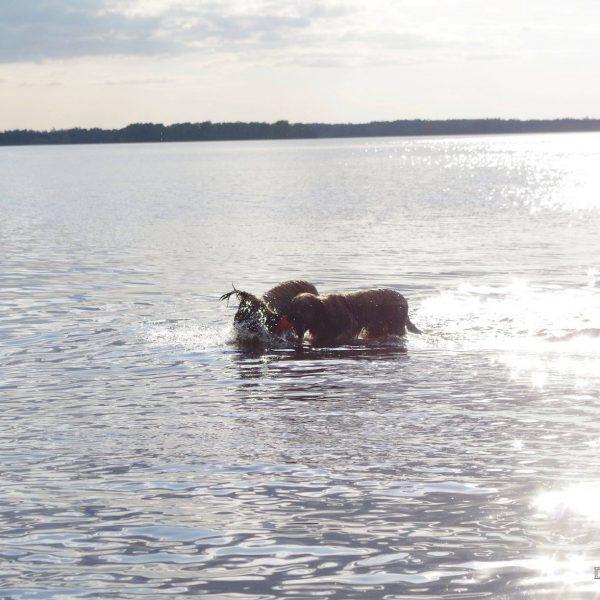 Zwemmen_met_je_hond